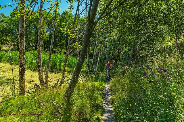 Hummocks Trail Pond