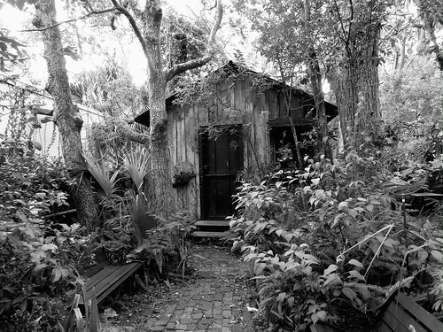 wood city bw tree green overgrown monochrome bench interesting cabin woods artist gallery unitedstates florida explore walkway quaint tranquil whimsical saintaugustine explored spanishstreet littlecabin ex187 bestposition95~82213