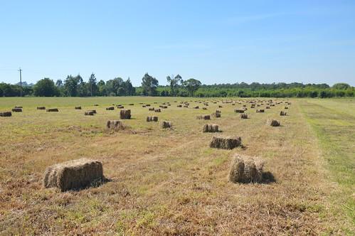 farm windsor hay bales