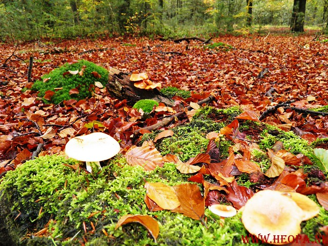 20-10-2012     Wedeblick-   Driebergen        25 Km (111)