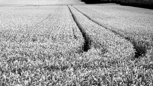 wheatrack