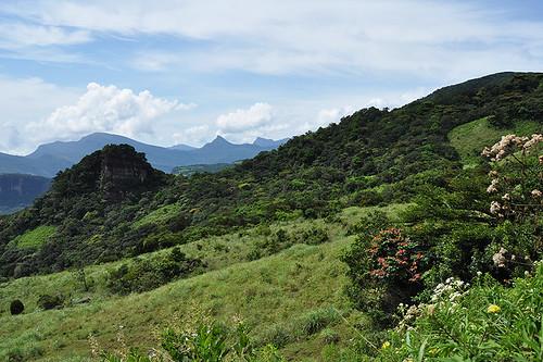 travel landscape tropics nature cloudforest jungle trees flora ceylon knucklesmountainrange srilanka southasia asia dnysmphotography dnysmsmugmugcom