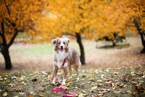 Laika in Central Park