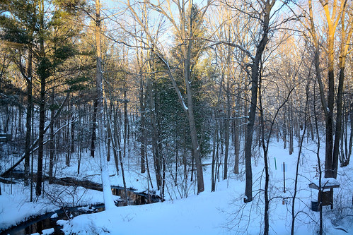 winter snow sunshine mi office woods stream view westlake biology mcc naturetrail muskegoncommunitycollege february2015