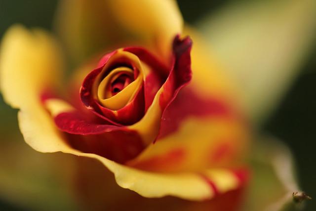 Au Coeur d'un Tourbillon Rouge et Jaune