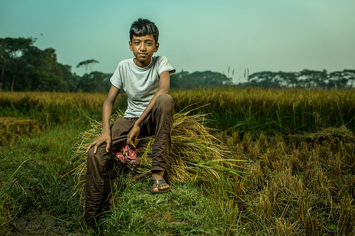 B-roll footage of farmer, Taroni Kanta, and his familiy in the rice field | by USAID Bangladesh