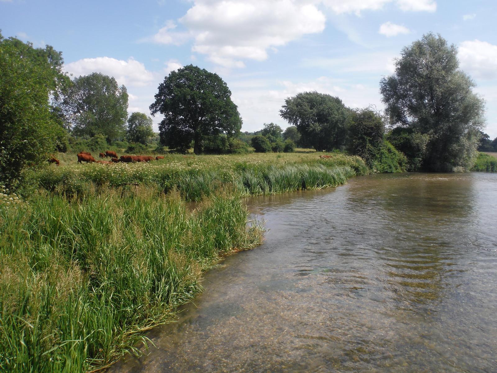 From River Test Bridge, Houghton SWC Walk 265 - Dean to Mottisfont and Dunbridge