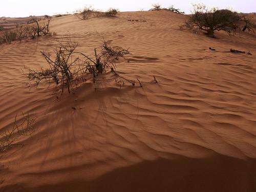 sand desert unitedarabemirates arid