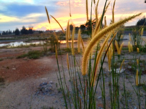 morning sunrise healing lifeisgreat klebang acceleratedchrysalisstage