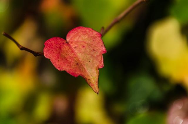 I love Autumn (Explored on 28-10-2013)