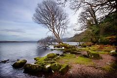 Wood meets Lake