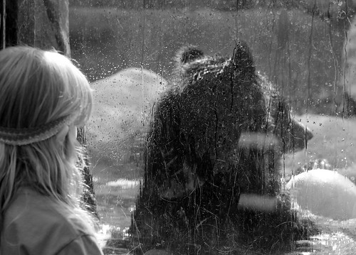 bear park blackandwhite window water glass ball zoo child bokeh providenceri rogerwilliamsparkzoo blackandwhiteimage