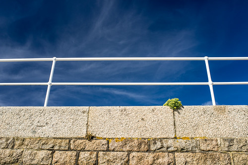 uk blue sky plant fence flora bluesky jersey fujifilm 365 railing channelislands x100 project365