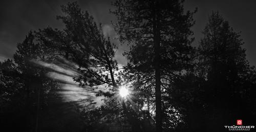 trees bw monochrome oregon centraloregon fire blackwhite shadows northwest bend smoke sony silhouettes fullframe fx a7r zeiss35mmf28lens sonya7r
