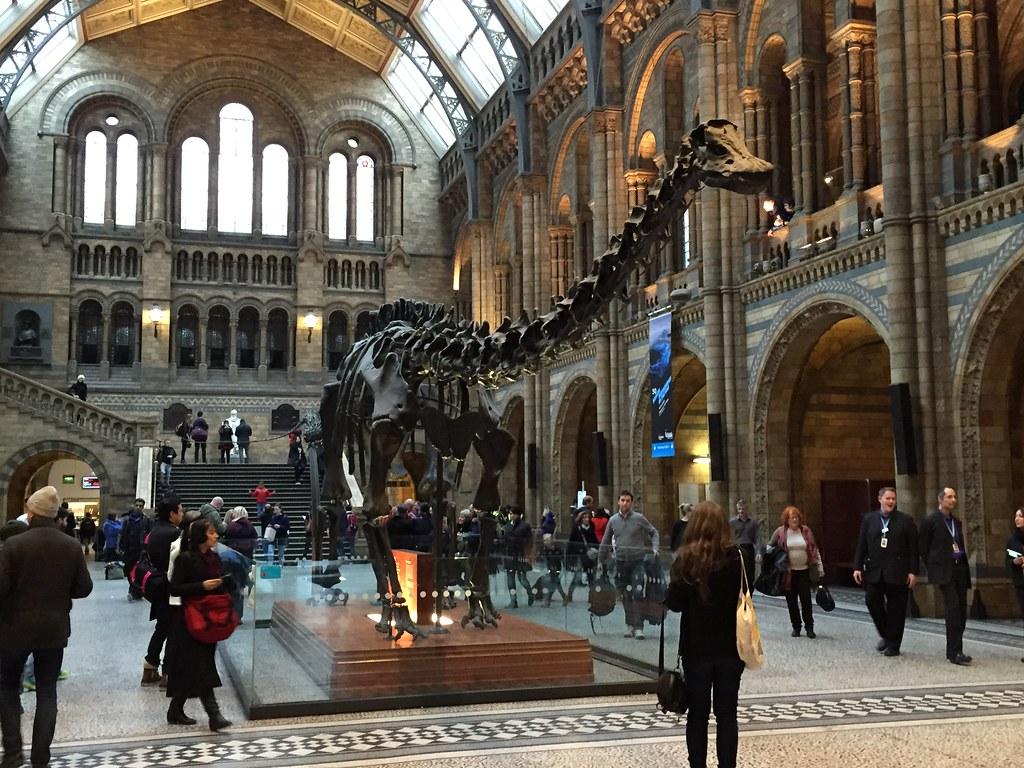 Diplodocus, Natural History Museum