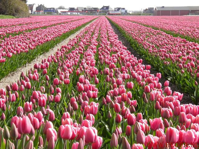 Castricum 15-04-2012 26 Km (35)