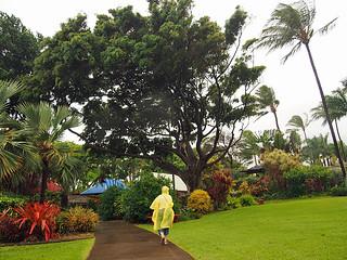 Maui- Tropical Plantation -Joe 1 | by KathyCat102