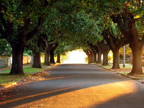 autumn trees light sunset sun canon day australia victoria clear vic avenue canonpowershots2is sunbeams oaktrees canonpowershot gippsland warragul lateafternoonlight streettrees auspctagged pc3820 phunnyfotos