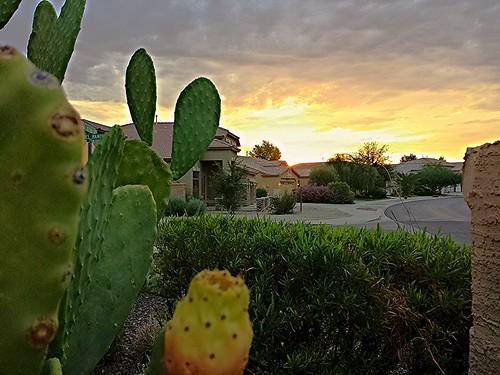 cactus sunrise flickrandroidapp:filter=none edugood thevillagesatqueencreek