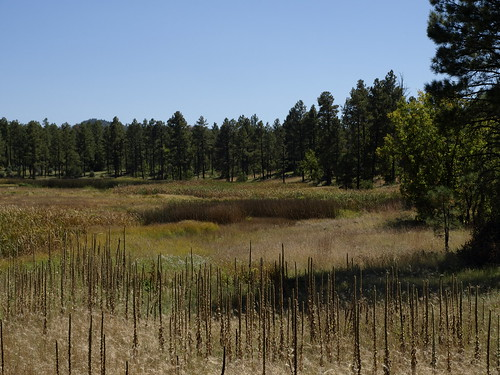 bigspringsenvironmentalstudyarea bigsprings springs wetlands meadows pinetoplakeside pinetop pinetoparizona whitemountains arizona geo:lat=3413973707003201 geo:lon=10997142925858498 geotagged riparian riparianzone riparianarea riparianhabitat