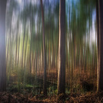 The Distorted Forest