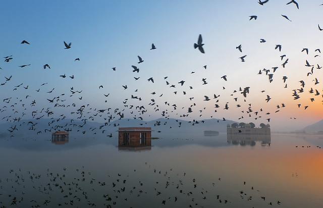 Jal Mahal at Dawn