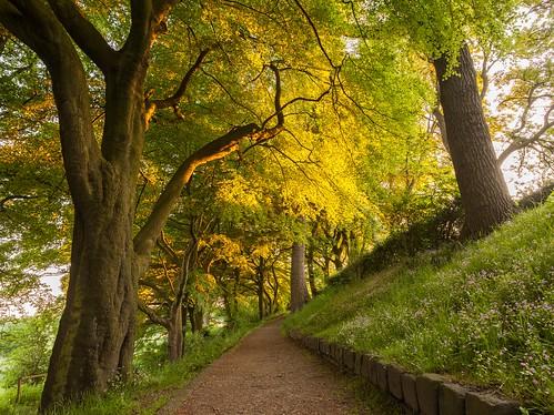 Sunset Foxdenton Park