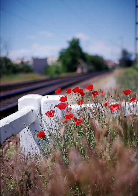 Poppies at the station