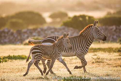 De Hoop Nature Reserve - South Africa   by scottnramsay