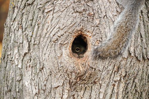 Peeking | by niXerKG