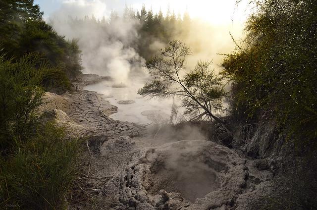 Mud Pool, Rotorua