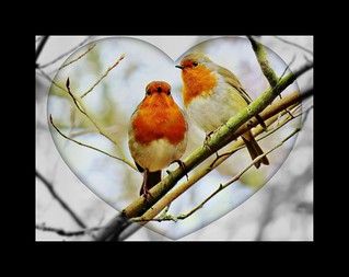 Happy Valentine's Day   by Feathering the Nest