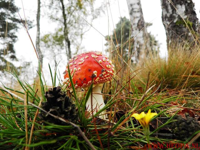 20-10-2012     Wedeblick-   Driebergen        25 Km (23)