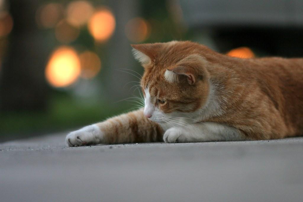 First Cat Photo (Curiosity)