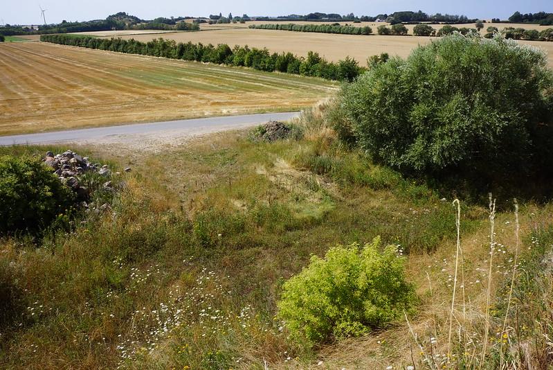 Kaedeby-Haver-2014-07-24 (16)