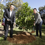 Guangzhou Vice Mayor Mr Wang Dong plants a commemorative tree with Lord Mayor Clover Moore at Quarry Green