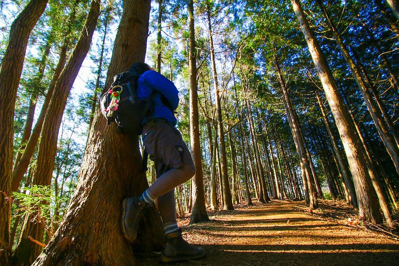 陣馬山の樹林帯