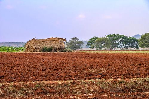 red field soil agriculture karnataka minoltamaxxum7d raghujana berambadi