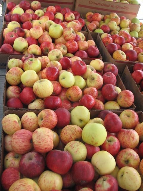 Fresh Gravenstein apples!