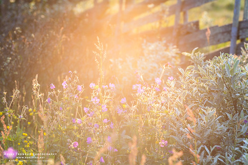Backlit Mountain Flora | by The Autodidact Photographer