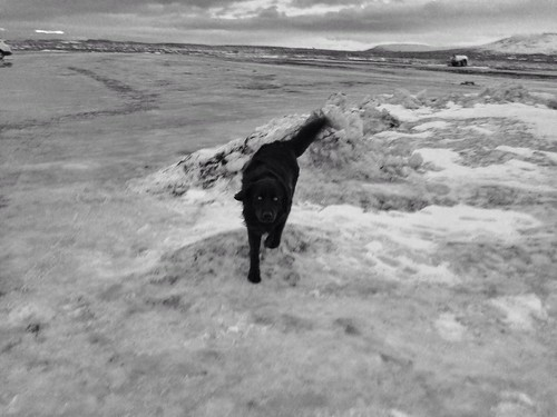 Car park dog in Iceland   by oggsie
