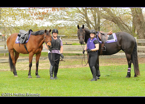 Go Team Purple! The results are in... WE WON OUR DIVISION! | by Rock and Racehorses