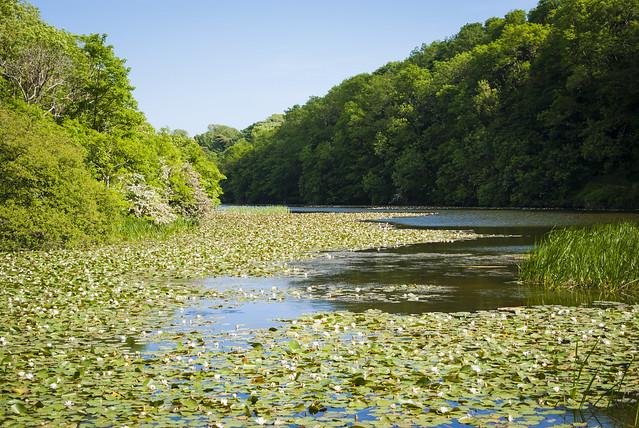 Bosherston Lilly Pond
