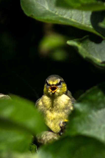 My noisy neighbour...
