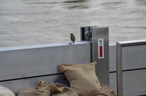 9022514383 bf2a09b6eb Elbehochwasser   Juni 2013
