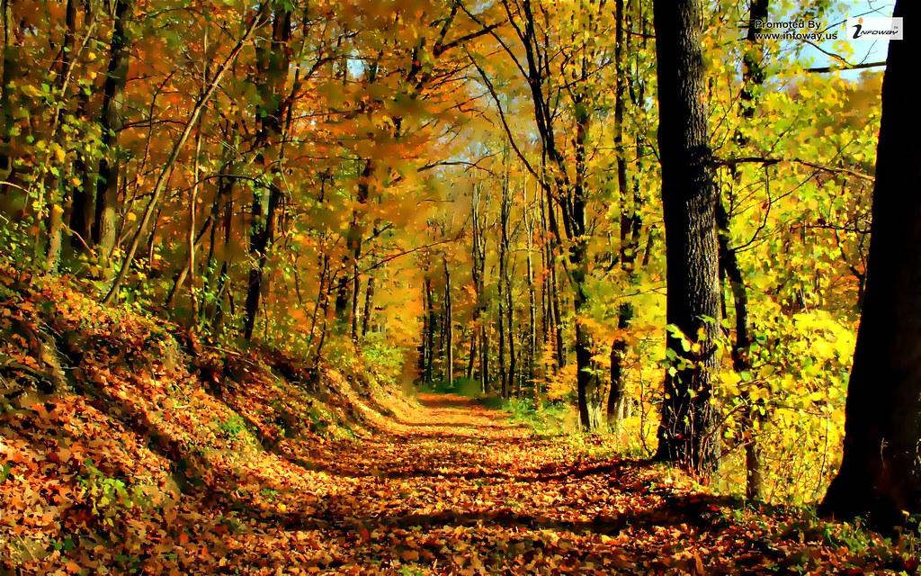 Autumn Forest Wallpaper Autumn Forest Wallpaper Flickr