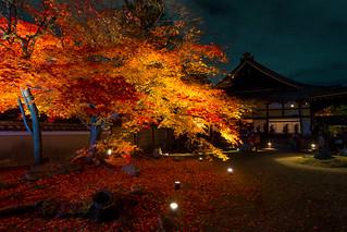 秋のライトアップ - 高台寺 / Kodai-ji Temple   by Active-U