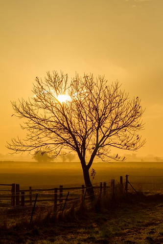 uk light orange mist colour tree castle nature fog sunrise landscape day glow shropshire shade shawbury moretoncorbetcastle ellesmerefnc