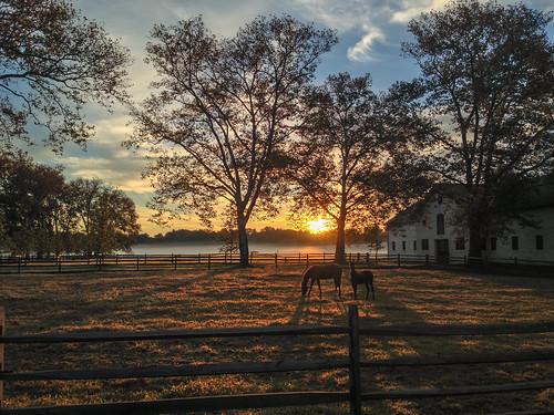 morning trees horse sun mist fog sunrise pennsylvania farm hdr lafayettehill erdenheimfarm