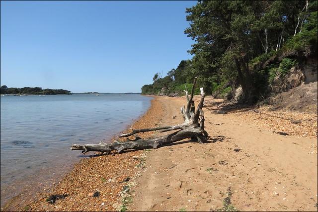 The beach at Brownsea Island